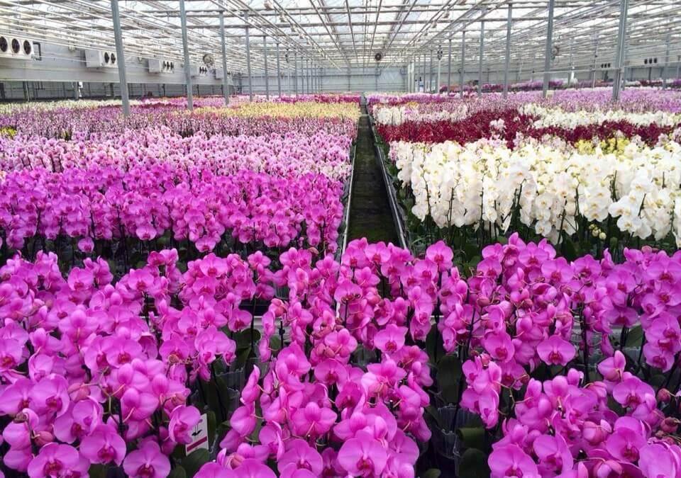 Trópusi kert és orchideafarm, Dobronak / Dobrovnik